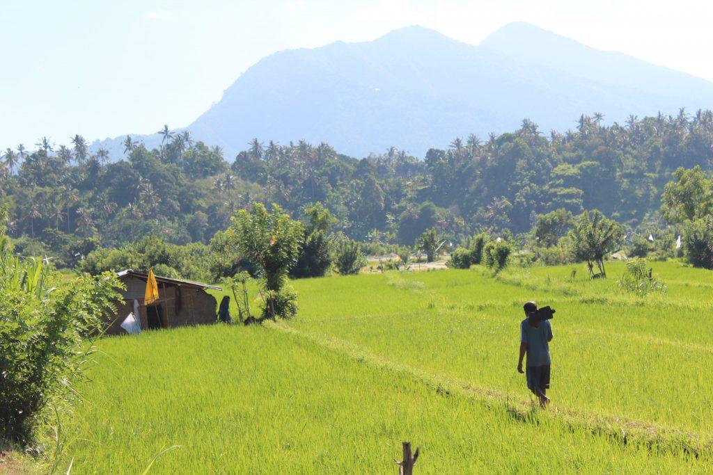 Ricefields Tirtagangga East-Bali